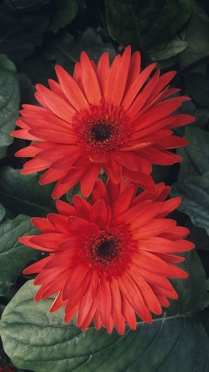 High angle view of red flower