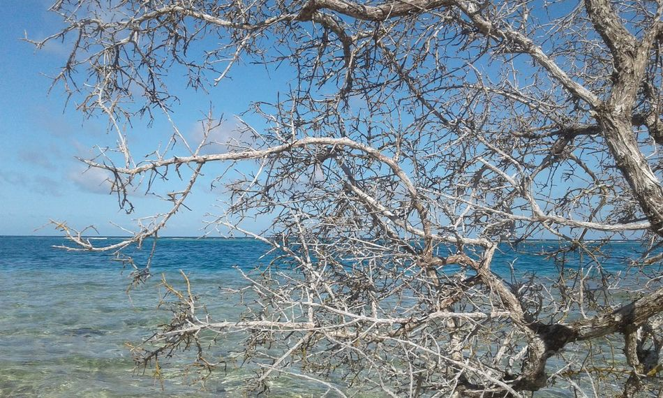 Nature Sea Sky Tree Beauty In Nature Water Clear Sky Outdoors Scenics Tranquility Bare Tree