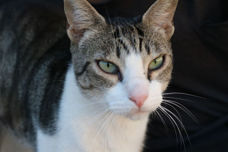 Domestic Cat Pets Feline One Animal Domestic Animals Animal Close-up Whisker Animal Themes Portrait Eye Mammal Alertness No People Looking At Camera Indoors  Closing Ear Day g Gato Gatos Garden Photography Game Garden Flowers Galicia