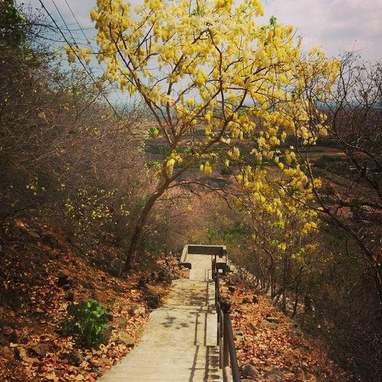 Downthehill Walk Gujarat