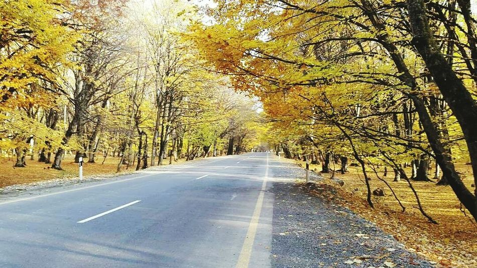 Azerbaijan Baku Dream Nature Yellow Day Tree No People Beauty In Nature Life Love ♥