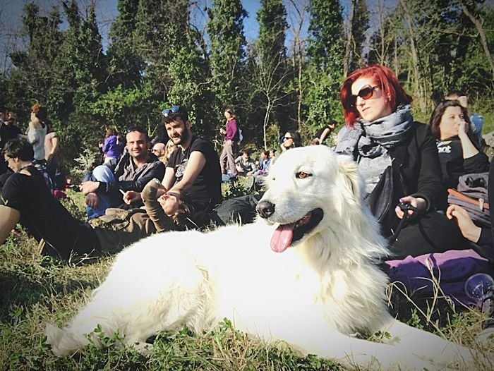 Saracca, Pets Dog Domestic Animals Friendship One Animal Happiness People Pet Owner Tree Fun Golden Retriever Mammal Adult Women Outdoors Cheerful Young Women Young Adult Day