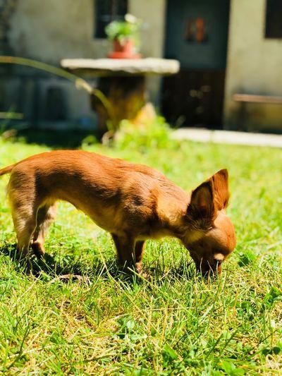 Dog Love Akira