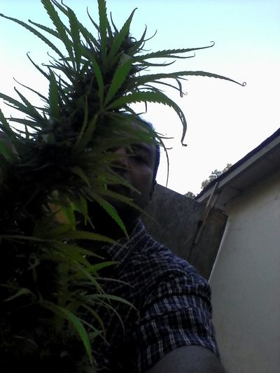 EyemtreeZzz & eyEm m££h Cannabis Sdmeds ThaCreatOr Trezz&meeh