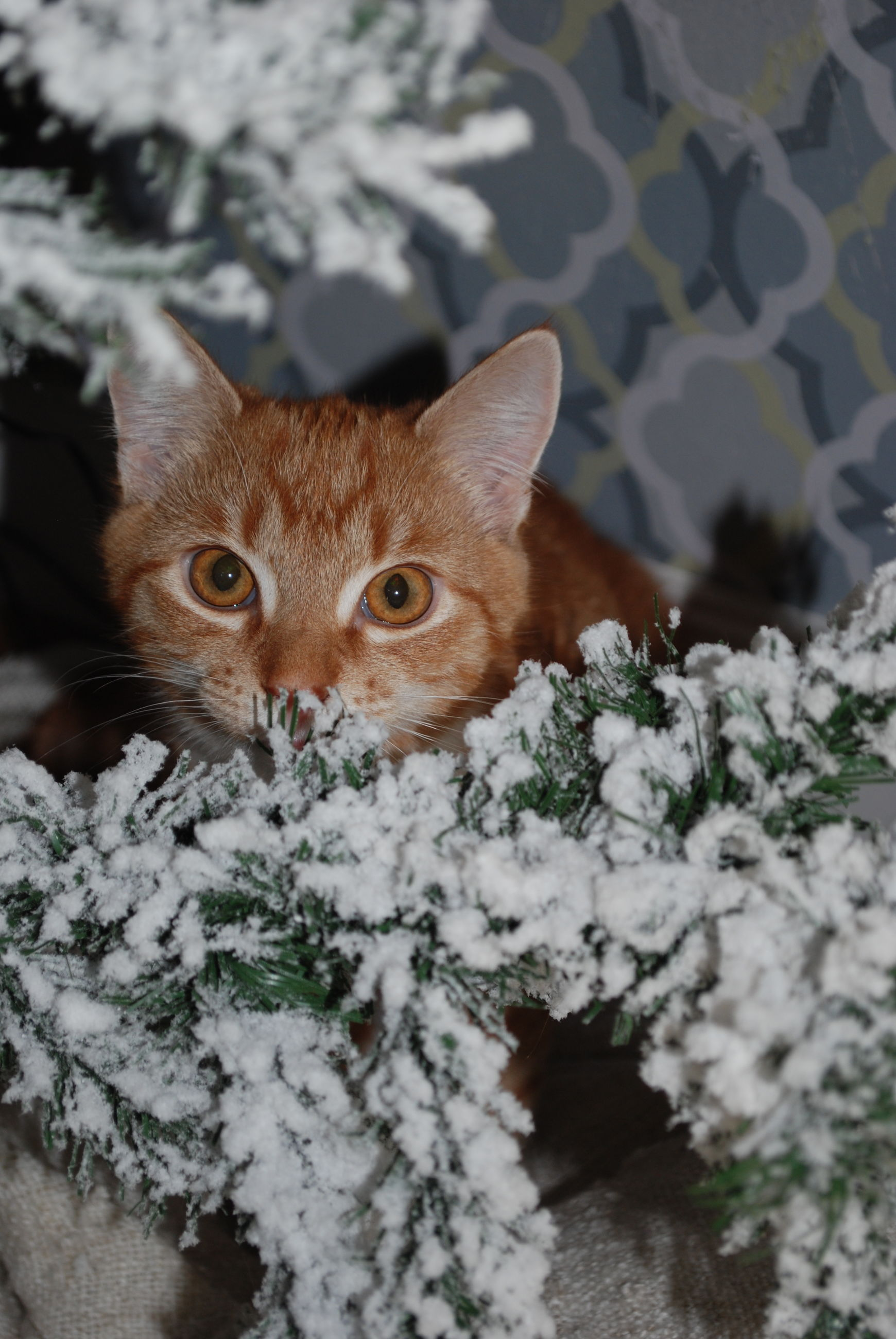 animal themes, one animal, flower, white color, nature, winter, plant, mammal, snow, focus on foreground, close-up, domestic cat, growth, cold temperature, domestic animals, high angle view, cat, season, outdoors, day