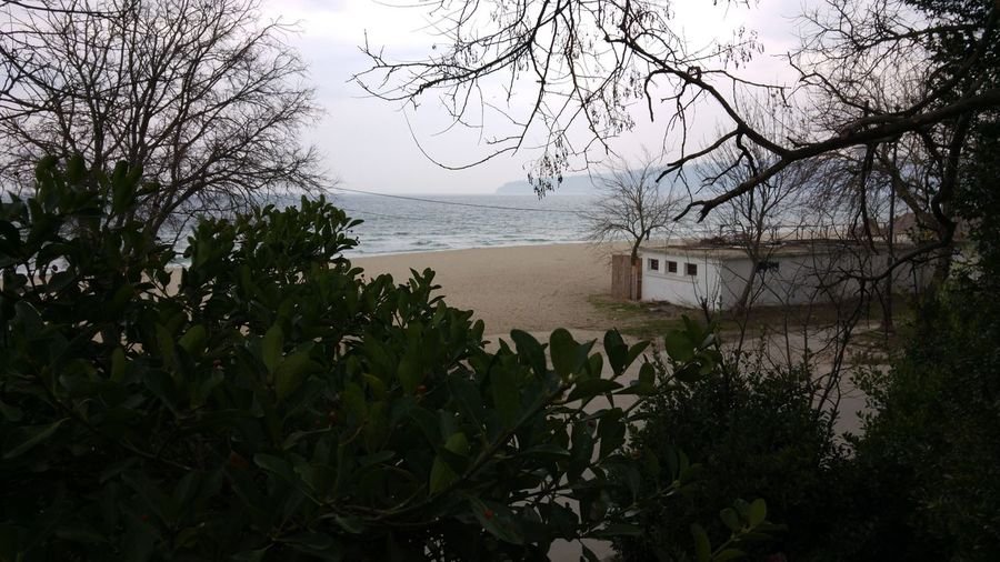 Hiden camera Hiden In The Grass Sand Sea And Sky Sea Bushes Winter Window