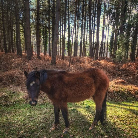New Forest Pony Tree Animal Themes Forest Nature Domestic Animals Mammal One Animal Field Day Outdoors Standing No People Livestock Beauty In Nature New Forest