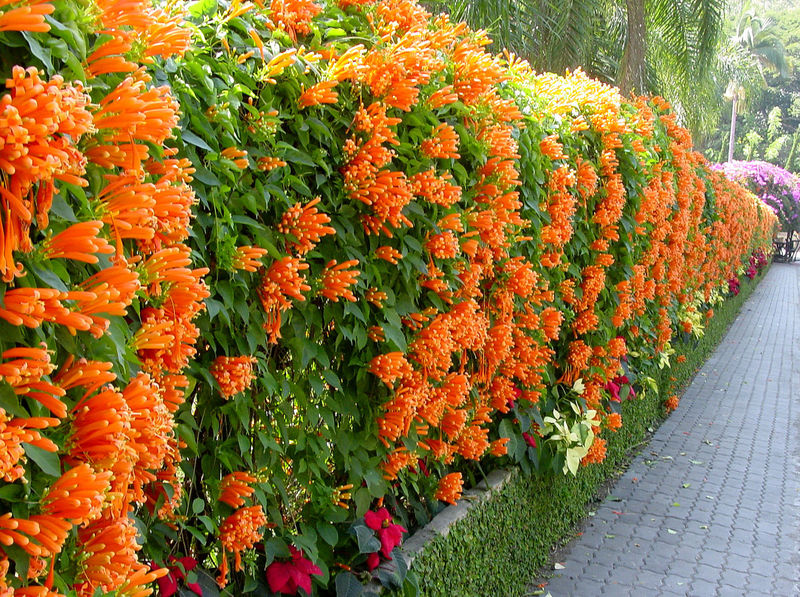 Beauty In Nature Botany Day Flower Garden Wall Growth In Bloom Orange Color Plant