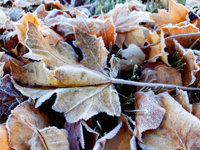 Full frame shot of dry leaves during autumn