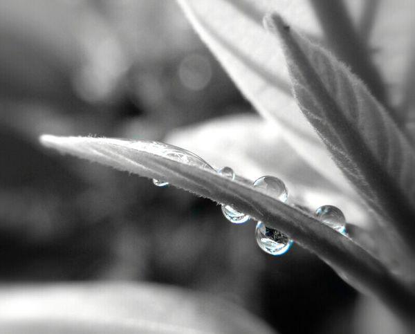 Mobilephotography Macro Photography Droplets Monochrome