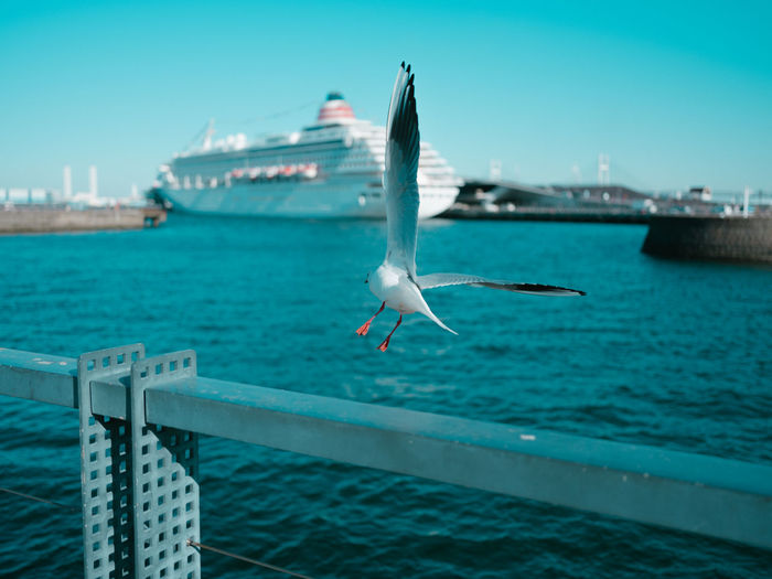 Water Seagull Animals In The Wild Sea Animal Themes Spread Wings Bird One Animal Animal Vertebrate Animal Wildlife Flying Sky Nature Transportation No People Mid-air Nautical Vessel Day Sea Bird Outdoors