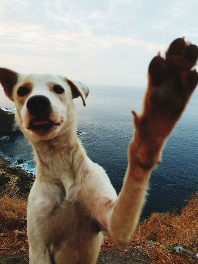 friend Beach Wish Hi5 Love Human Hand Retriever Obedience Purebred Dog Loyalty Canine Puppy