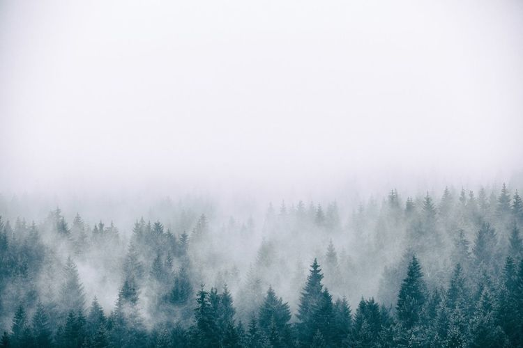 Scenic view of forest during foggy weather against sky