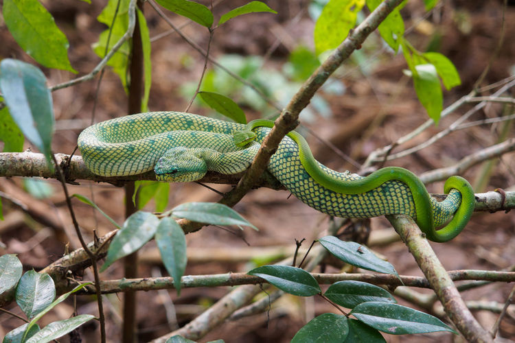 Close-up of green snakes on tree