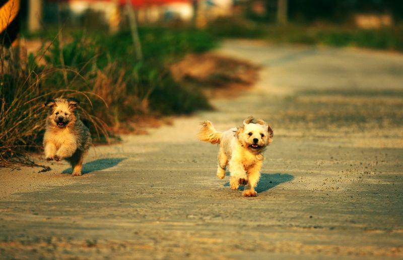 Dog running on ground