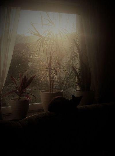 Home alone Cat Cat Sun Bathing Silhouette Sunlight Sunrise Sunshine