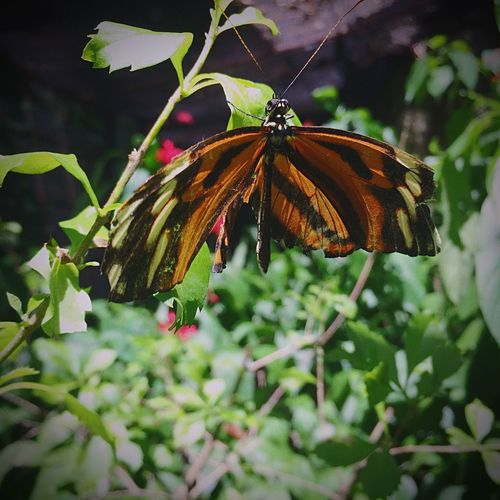 Butterfly Nature Nature Photography 😚 Animal Themes No People Fragility