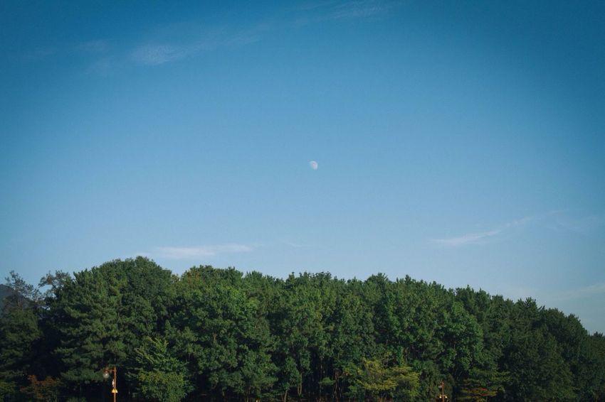 낮에달떳다. Daylight Moon Taking Photos Relaxing Simplicity EyeEm Nature Lover