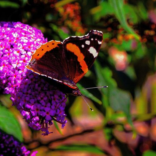 Insect Animal Themes One Animal Animals In The Wild Wildlife Butterfly Butterfly - Insect Flower Focus On Foreground Close-up Beauty In Nature Plant Nature Pollination Growth Fragility Animal Antenna Symbiotic Relationship Animal Wing Freshness