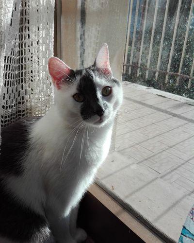 Matisse Cat Gatto Mycat