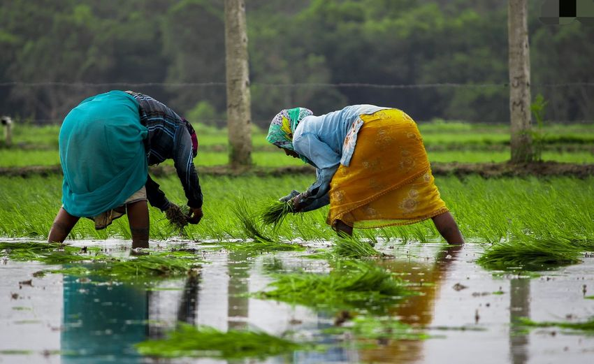 Rear view of people working in water