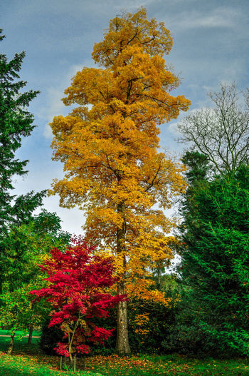 Tree color trees Autumn Branch Change Day Fall Forest Green Green Color Growth Hdrlove Leaf Lush Foliage Nature Outdoors Postprocessing Red Redhead Season  Tree Tree Trunk Yellow