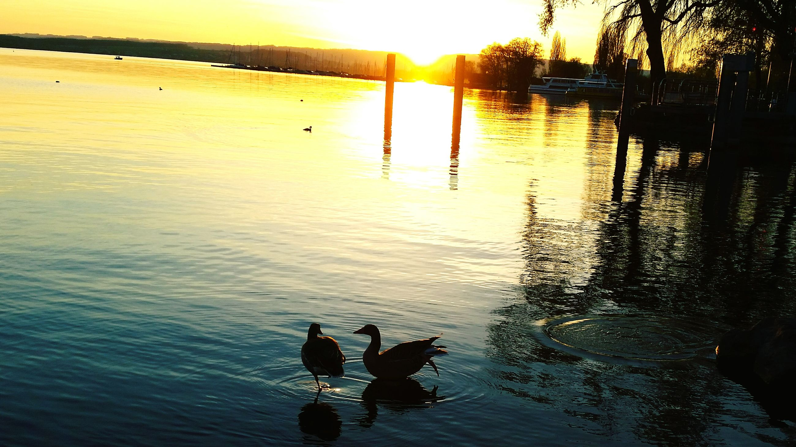 water, reflection, sunset, silhouette, lifestyles, lake, men, leisure activity, sun, sunlight, river, rippled, nature, transportation, person, tranquility, outdoors