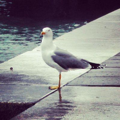 #venice #bird #igers #igfamos #instagood Bird Venice Igers Instagood Igfamos