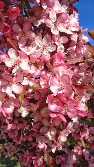 Nature's Diversities DLUFL Spring Flower