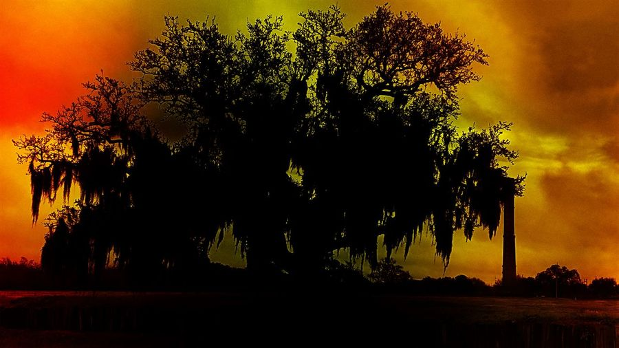 Atmospheric Mood Beauty In Nature Civil War Oak Free Oak Tree Glowing Glowing Sunse Got Tere Landscape Nature Old Oak Tree Ols Oak Silhouette Spanish Moss Spanish Moss Oak Spanish Moss On Oak Tr Spanish Oak Tree Sun Shining On An Old Oak Tree Sunset Oak Tree Tranquility Tree Silhouette Trees At Sunset Tropical Climate