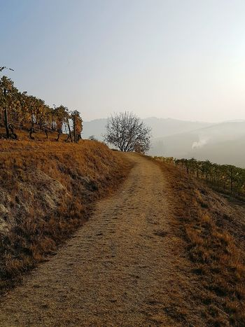 Foggy Morning Foggy Day Foggy Autumn Day Langhe Tranquility Silence Vineyards In Autumn Autumn Autumn Colors Beauty In Nature Hill Sky Outdoors Nature No People Day