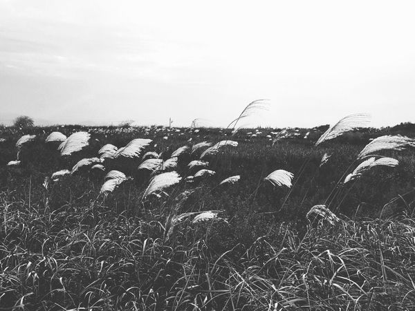Field Nature Day Tranquility Tranquil Scene Grass No People Outdoors Beauty In Nature Landscape Scenics Agriculture Growth Rural Scene Sky Animal Themes Hay Bale Mammal IPhone Photography The Great Outdoors - 2017 EyeEm Awards