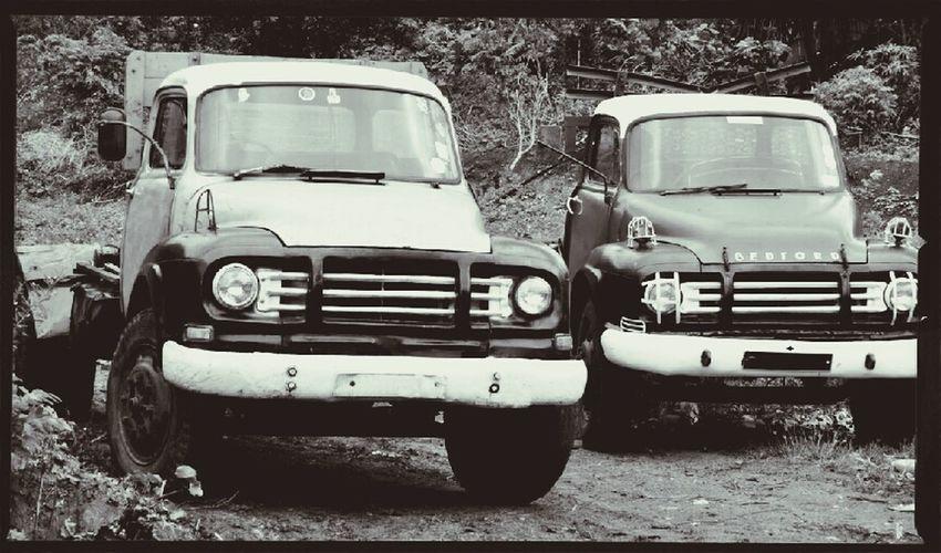 Mauritius Bedford lorries