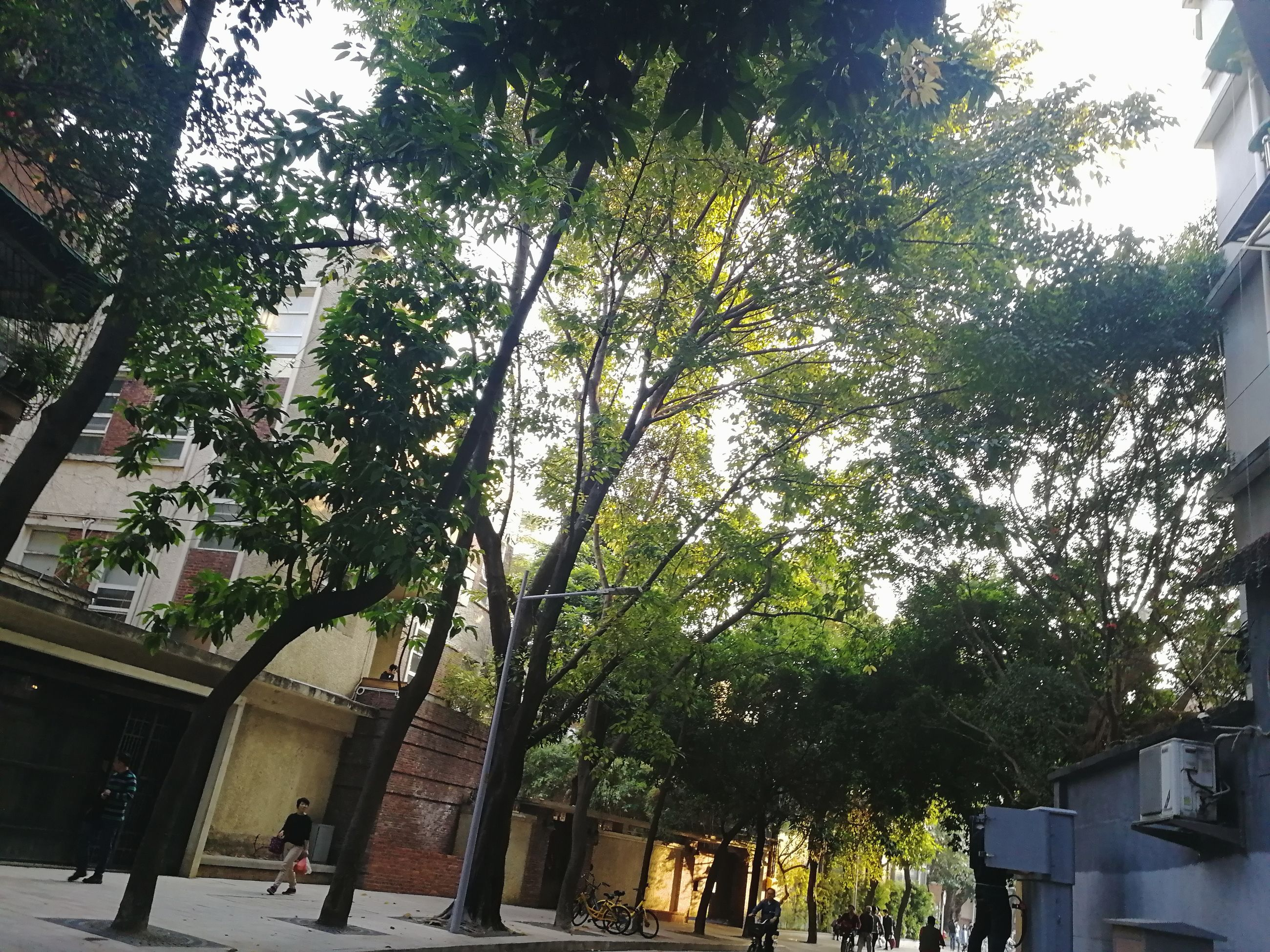 tree, growth, architecture, building exterior, built structure, outdoors, day, nature, city, no people