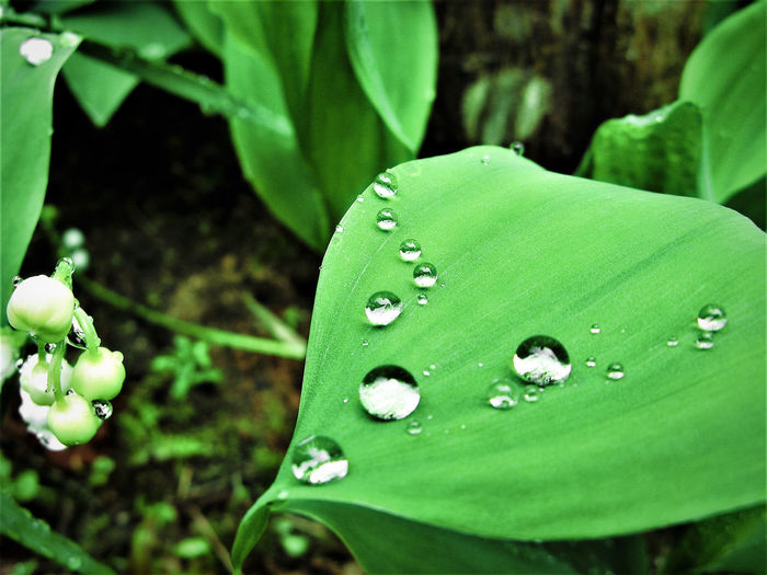 Beauty In Nature Close-up Day Drop EyeEm Nature Lover Fragility Freshness Green Color Green Color Growth Leaf Nature No People Outdoors Plant Rain Raindrops Rainy Days