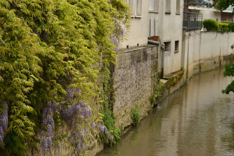 Architecture Beauty In Nature Building Exterior Built Structure Canal Canals And Waterways Champagne Day Nature No People Outdoors Reflection In Water Sandstone Buildings Sky Tree Water Wisteria Wisteria Flowers