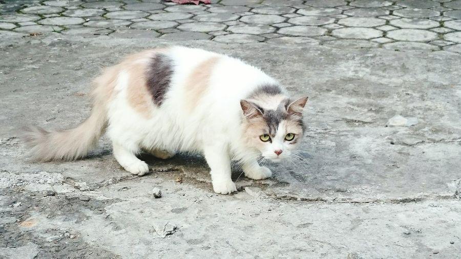 Cat afraid of me Of Cats Pet