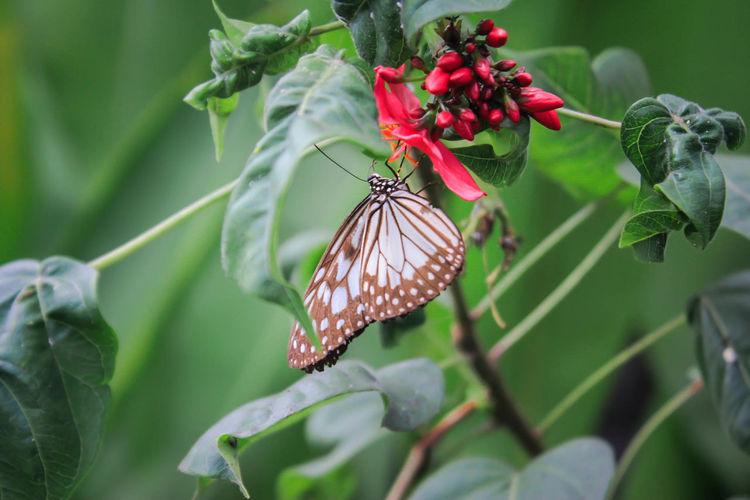 Butterfly Beautiful Close-up Macro Animal Photography Eyeemphotography