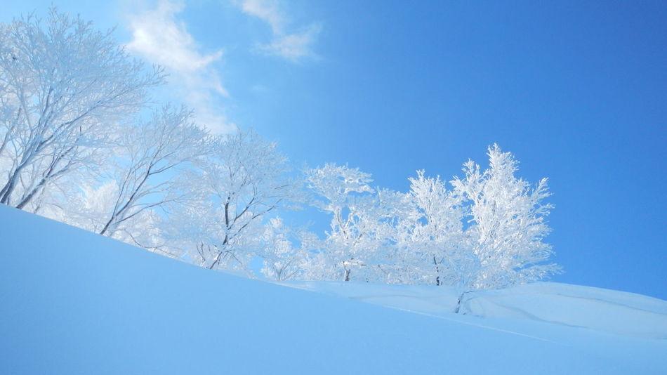 雪景色 Snow Snowscape Blusky Rime Blue White Mountain Beauty In Nature Nature Tree Sky Winter Cold Temperature 冬 雪 雪景色 北海道 ニセコ 青空 青空
