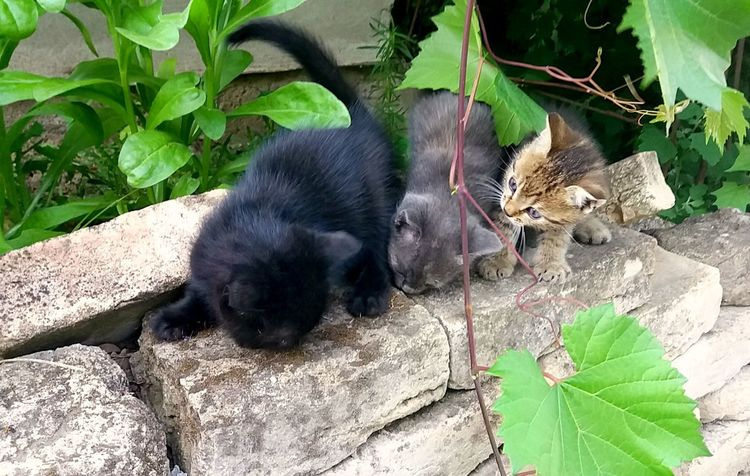 Backyard Photography Kittens Animal Themes Animals In The Wild Black Kitten Cats Close-up Domestic Animals Domestic Kittens Friend Friendship Green Color Grey Kitten Growth High Angle View In The Backyard Nature No People Outdoors Plant Three Kites Three Kittens Young Animal