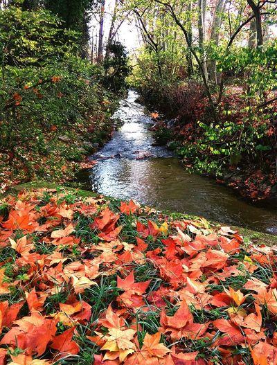 Vida. 🌲🍁. River Riu Rio Tardor Autumn Autumn🍁🍁🍁 Tranquil Scene Landscape Vallgorguina Camins Vidasana Jardins Núvols Tree Water Sunlight Grass Plant Sky EyeEmNewHere