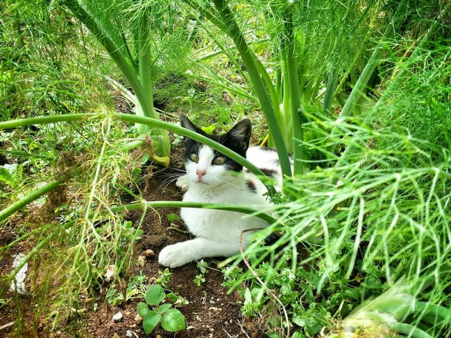 Taking Photos Cat Cats Catoftheday Relaxing Enjoying Life Animals Nature_collection Nature Getting Inspired My Elios Garden