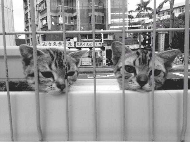 好可憐 ⋯ Cute Cat 認養代替購買
