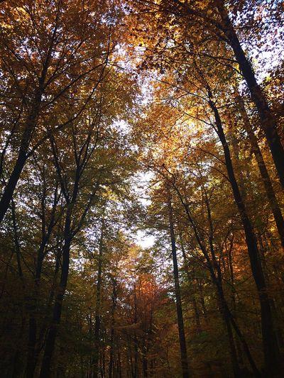 Herbst ❤️ Wanderlust Forest Autumn