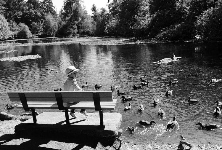 MarkusProjectBW2016 Urbanphotography Streetphotography Street Photography Bird Water Animal Wildlife Animals In The Wild Vertebrate Group Of Animals Animal Lake