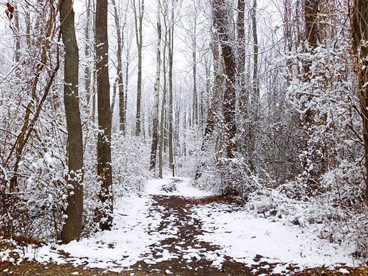 Snowy walks are some of the best. Even though I loathe the cold. Snow Trails Forest Woods Newjersey Winter Walk GetFit Getout Explore Adventure Nikon Beinspired Beautiful Beauty Winterwonderland Lile Follow SUPPORT