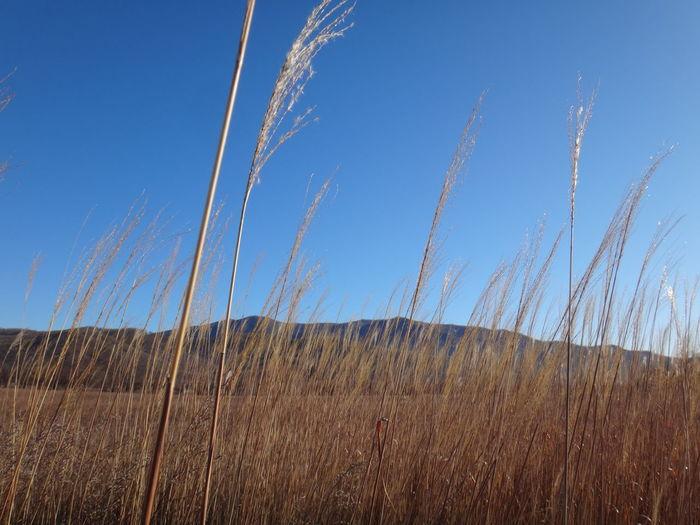 Land Landscape