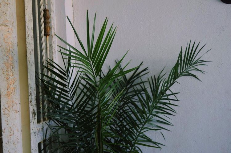 Plant Green White White Wall