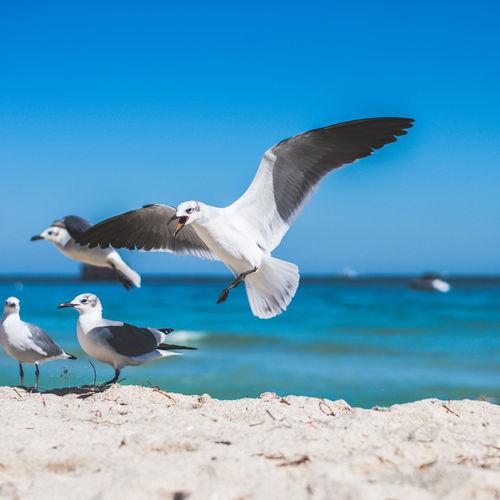 Beach Birds Birds Beach