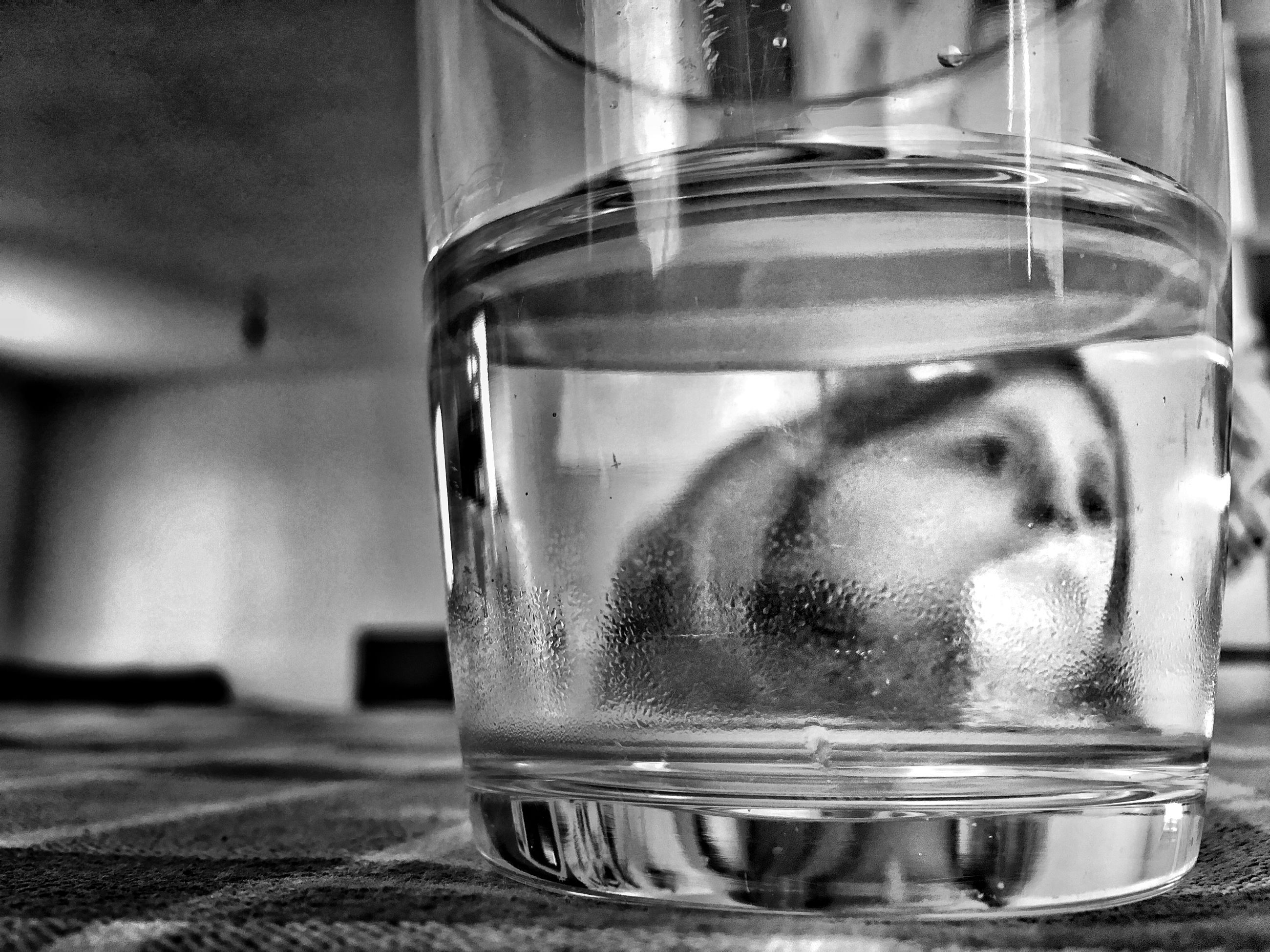 drink, refreshment, glass - material, close-up, drinking glass, transparent, food and drink, focus on foreground, indoors, freshness, glass, alcohol, still life, reflection, ice cube, drop, table, water, wet, liquid